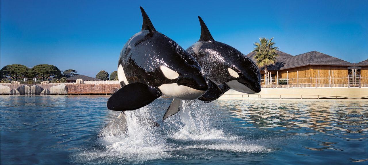 Orques du parc animalier à côté du camping Les Rives du Loup